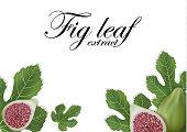 Fig leaves on white background. Figs leaf. Banner design elements. Vector