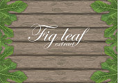 Fig leaves on wooden cutting board. Figs leaf. Banner design elements. Vector