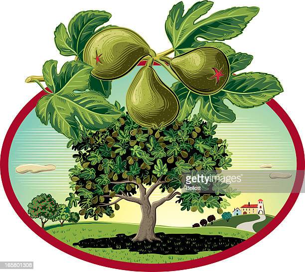 fig tree in oval frame - fig tree stock illustrations