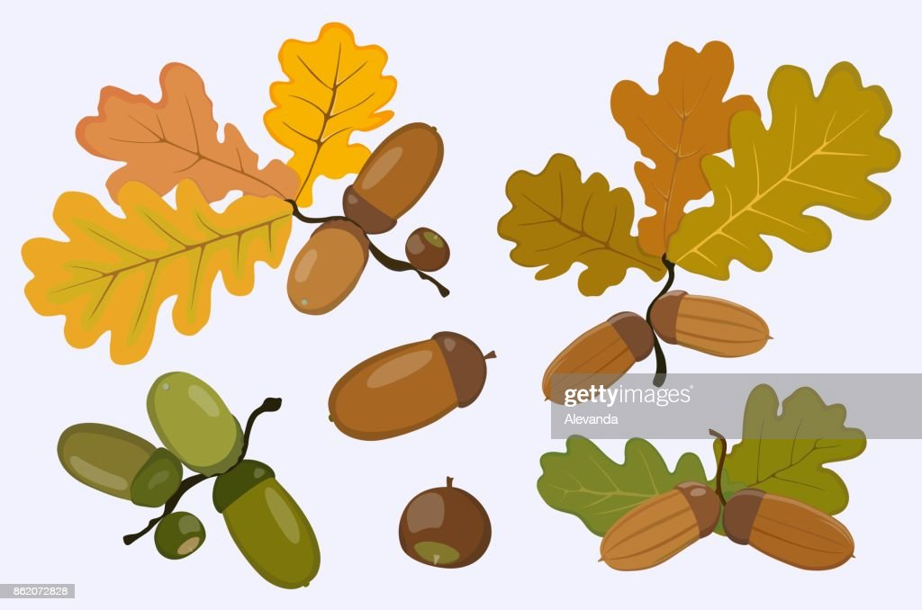 Figure of the acorn and oak leaves. Vector illustration.