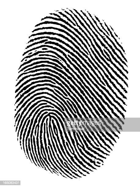 fingerprint vector - identity theft stock illustrations