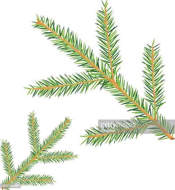 fir branch - pine wood material stock illustrations, clip art, cartoons, & icons