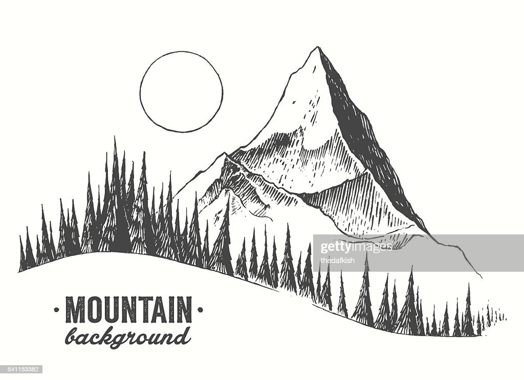 Fir forest mountain drawn vector illustration