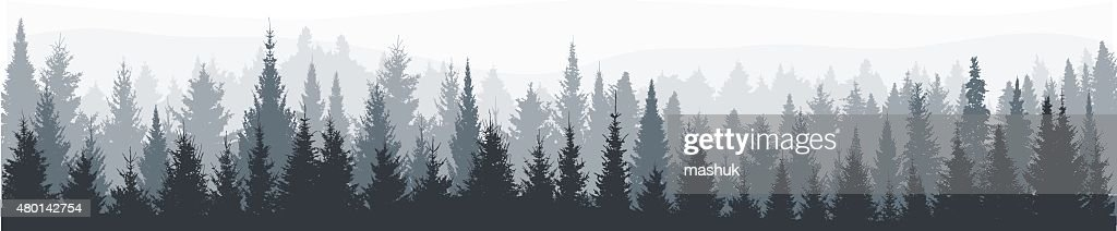 Fir tree forest panorama : stock illustration