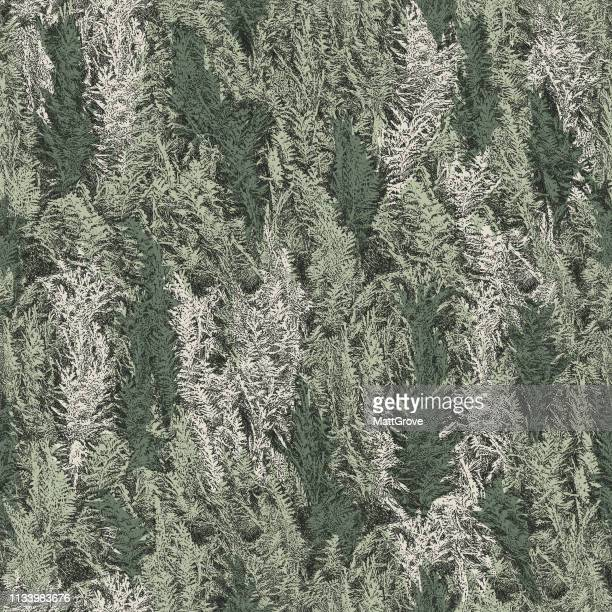 fir tree hedge seamless repeat pattern - spruce tree stock illustrations