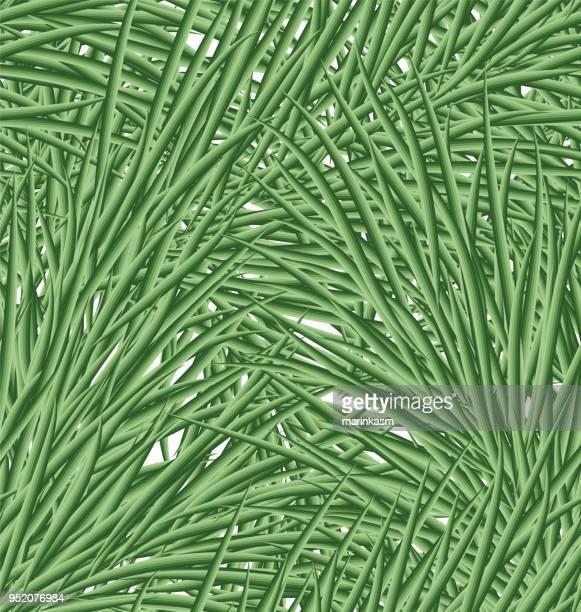 fir tree needles. seamless pattern of fir tree needles. vector illustration - cedar tree stock illustrations, clip art, cartoons, & icons