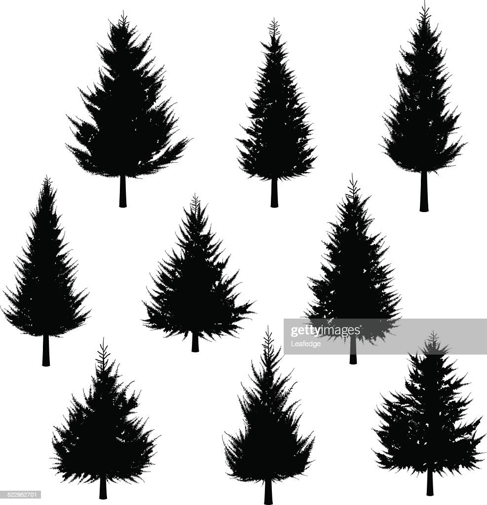 Fir tree silhouette[for Christmas tree] : stock illustration