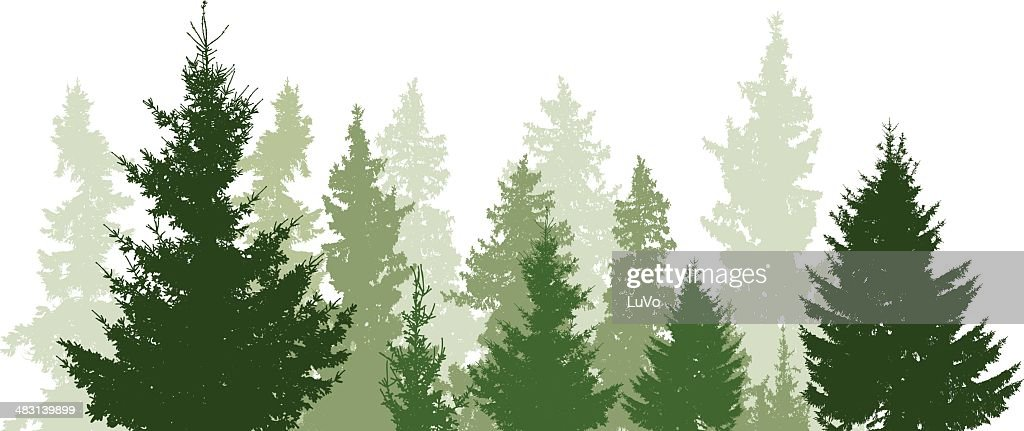 Fir trees landscape : stock illustration