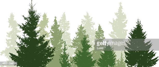 fir trees landscape - coniferous tree stock illustrations, clip art, cartoons, & icons