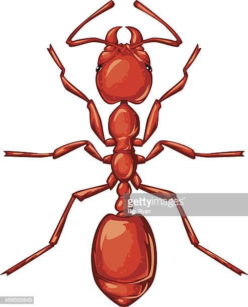 ilustraciones, imágenes clip art, dibujos animados e iconos de stock de hormiga de fuego - hormiga