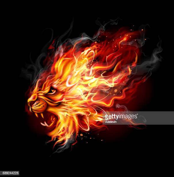 fire lion - fire natural phenomenon stock illustrations, clip art, cartoons, & icons