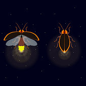 Firefly with open and closed wings