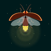 Firefly with open wings