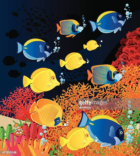 Fish and Coral