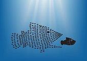 fish concept