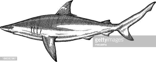illustrations, cliparts, dessins animés et icônes de dessin de poisson - requin