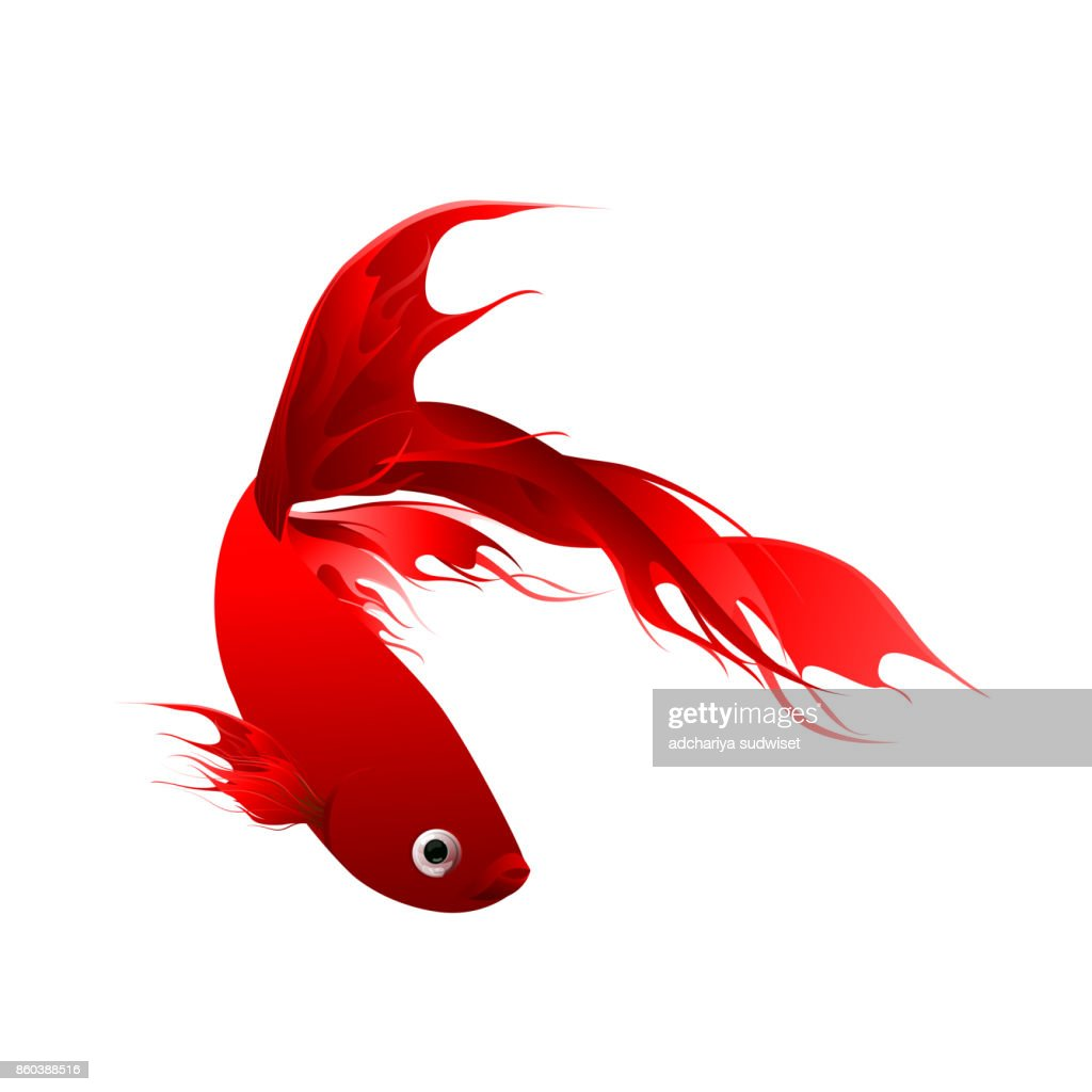 Fish Graphic Design Red Color Abstract Style Isolated On White ...