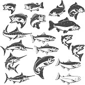 Fish illustrations on white background. Carp, bass fish, trout, salmon, sword fish icons. Design elements for label, emblem. Vector illustration.