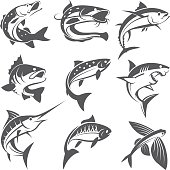 fish illustrations set