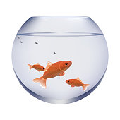 fish in fish bowl