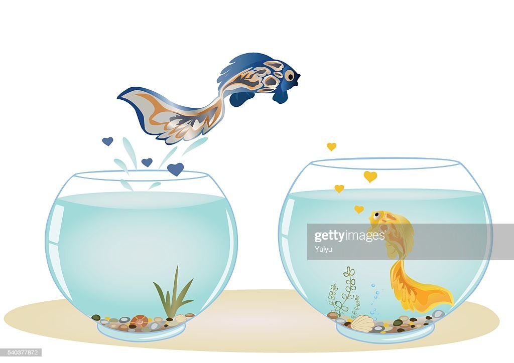 Fish in love jumping to his beloved