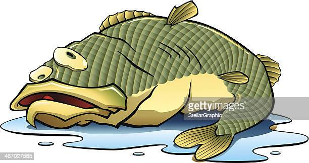 fish out of water - puddle stock illustrations, clip art, cartoons, & icons