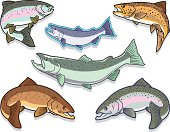 Fish: Salmon and Trout Set