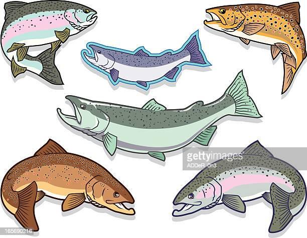 illustrations, cliparts, dessins animés et icônes de poisson: saumon et à la truite ensemble - saumon