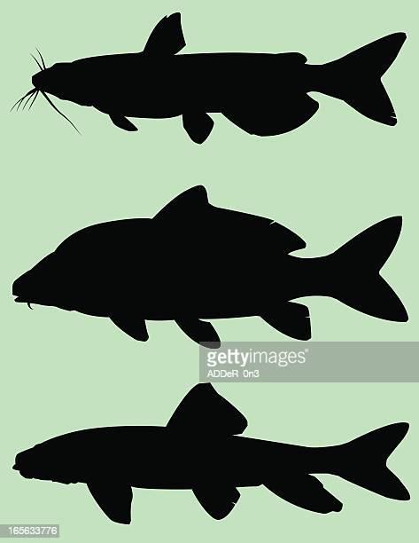 illustrations, cliparts, dessins animés et icônes de silhouette de poissons: bas feeders - carpe