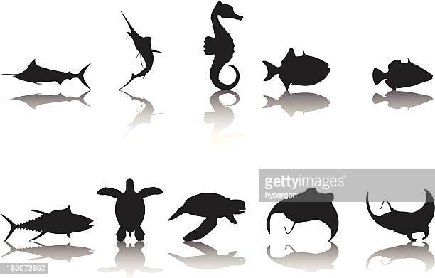 fish silhouette collection - marlin stock illustrations, clip art, cartoons, & icons