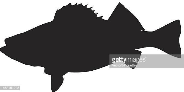 ilustraciones, imágenes clip art, dibujos animados e iconos de stock de silueta de pescado - animal vertebrado