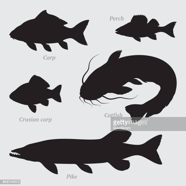 illustrations, cliparts, dessins animés et icônes de silhouettes de poissons ensemble - carpe