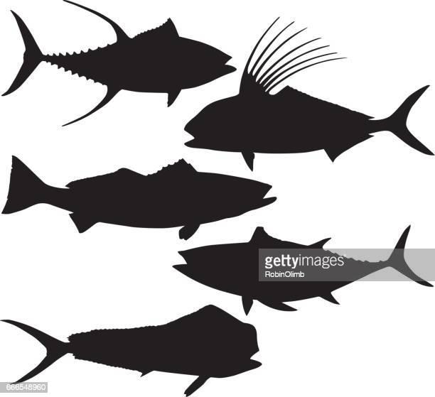 ilustraciones, imágenes clip art, dibujos animados e iconos de stock de siluetas de peces - bonito del norte