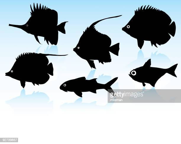 fish silhouettes - butterflyfish stock illustrations, clip art, cartoons, & icons
