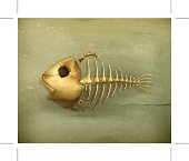 Fish skeleton old style