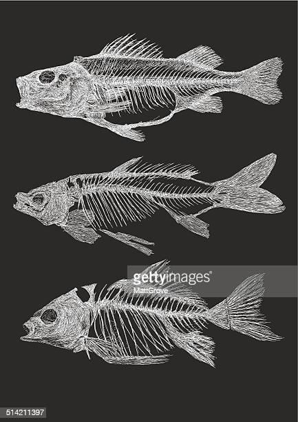 fish skeletons - animal skeleton stock illustrations, clip art, cartoons, & icons