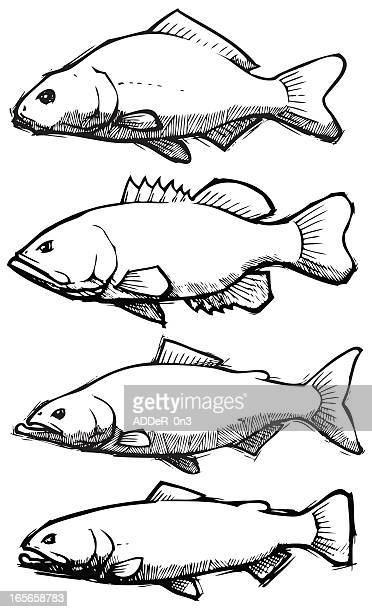 Fish: Sketch Collection