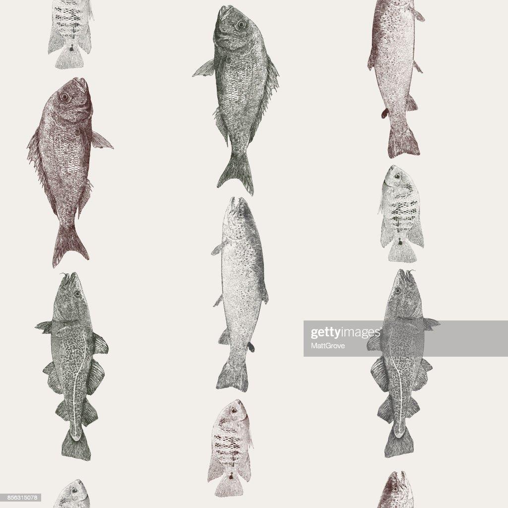 Fish Stripe Repeat Pattern : stock illustration
