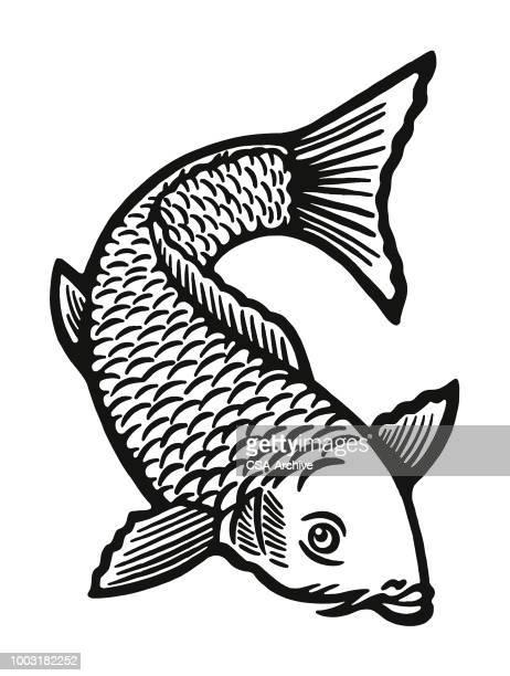 illustrations, cliparts, dessins animés et icônes de poisson - carpe