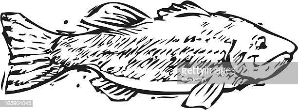 fish - fillet stock illustrations, clip art, cartoons, & icons