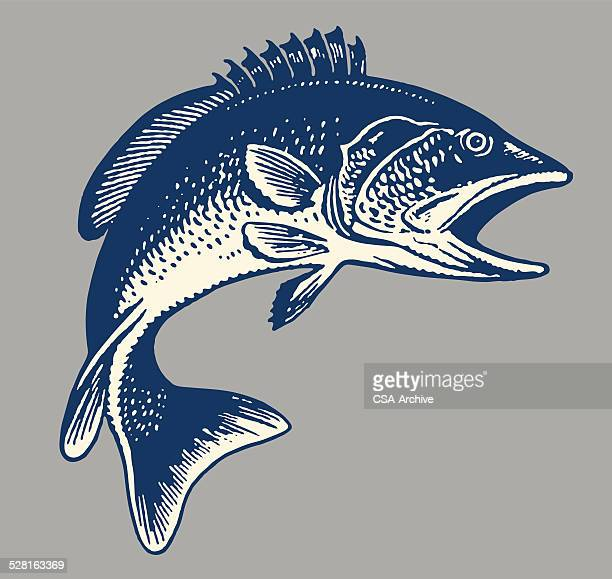 fish - fish stock illustrations