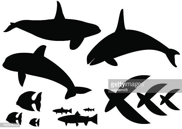 fishes and whales - killer whale stock illustrations, clip art, cartoons, & icons