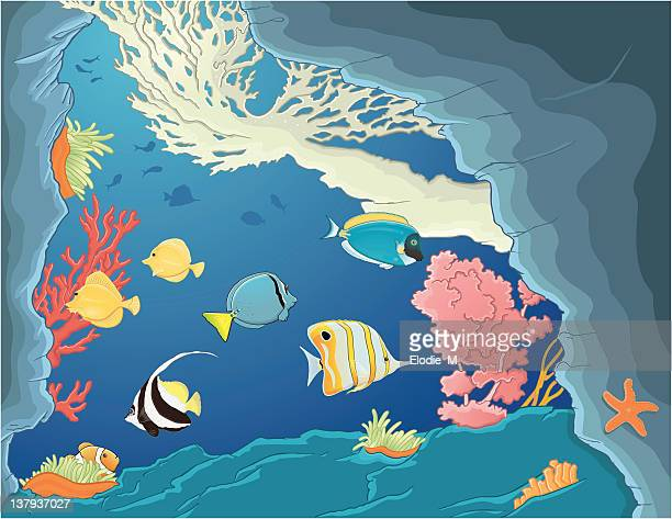 fishes in deep sea / poissons mer tropical - acanthuridae stock illustrations, clip art, cartoons, & icons
