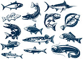 Fishes species vector isolated icons