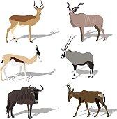Five african antilope