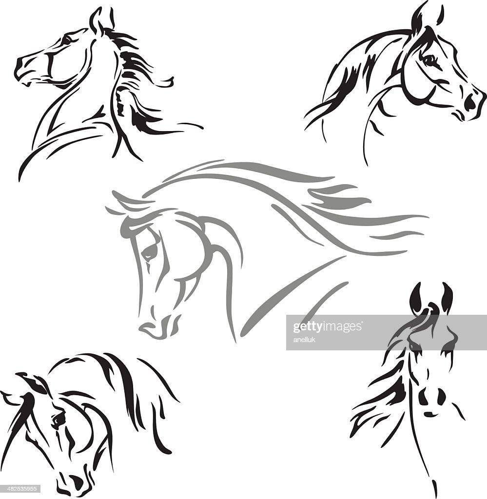Five horse's head studies