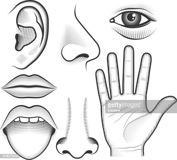 five human senses black & white vector interface icon set - ear stock illustrations