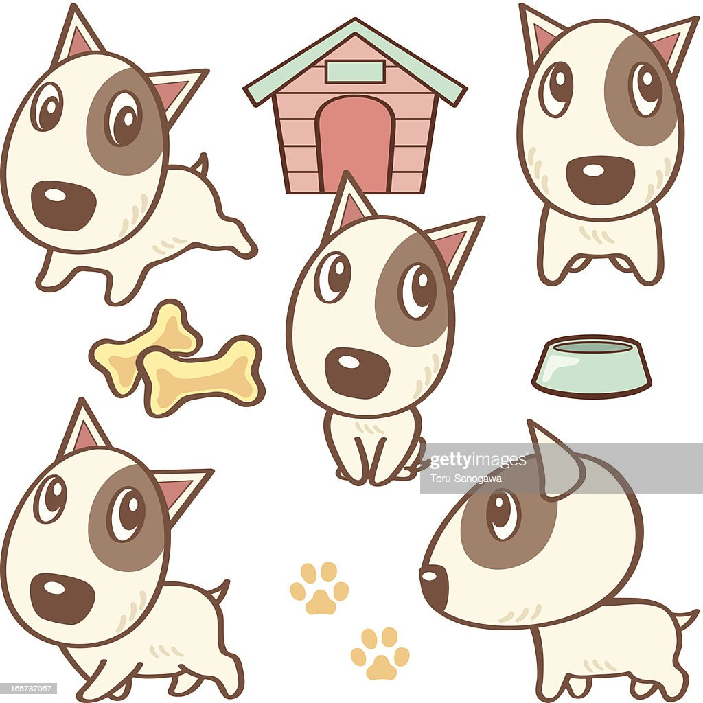 Five poses of Bullterrier