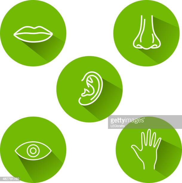 five senses icons - sensory perception stock illustrations