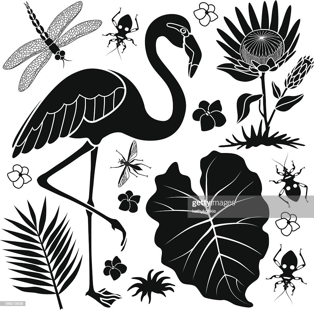 flamingo and taro leaf : stock illustration